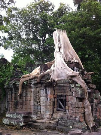 Trees eat stones at Preah Khan